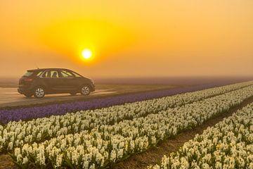 Auto in de mist van Peter Heins