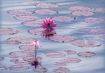 Stillleben von Lotusblumen und Blätter in Teich von Marcel van Balken