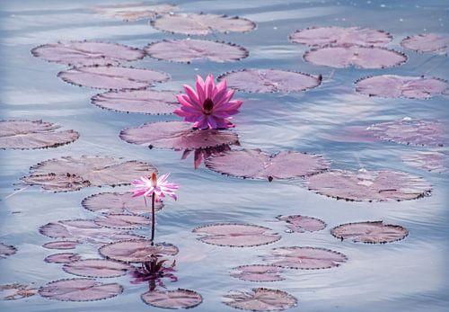 Lotus bloemen in pastel vijver van Marcel van Balken