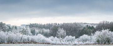 Winterlandschaft im Frost von Tobias Luxberg