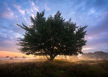 Punky Tree van Jeroen Lagerwerf