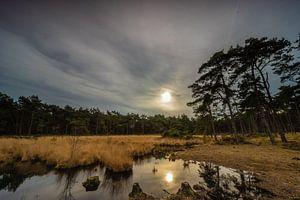 Sonnenuntergang auf der Kalmthoutseheide von Remco Baks