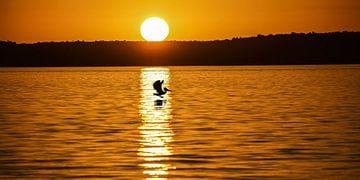 zonsondergang met pelikaan van Stefan Havadi-Nagy
