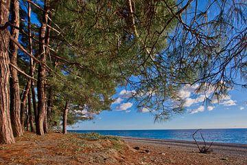 Strand. Dennenbosje (bos) aan de kust van de blauwe zee op een zomeravond. Pitsundskaya-bosje relikw van Michael Semenov