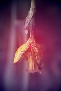 verfaulte Blume unten von Ribbi The Artist