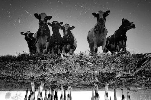 Koeien bij de sloot (zwartwit) van