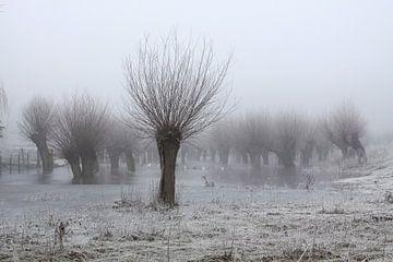 Kopfweiden bei Frost und Nebel von Karina Baumgart