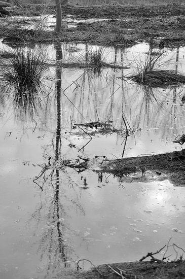 moeraslandschap van Lilian Huijben