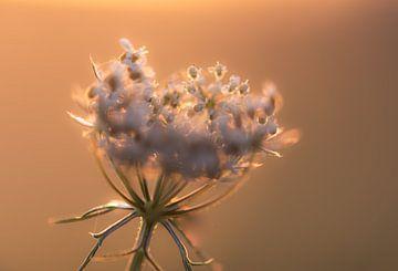 weiche Wildblume von Tania Perneel