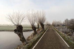 Bevroren polder landschap met sloot en knotwilgen en een boerenweg in Nederland van
