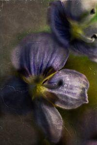 Miniblume Ehrenpreis von