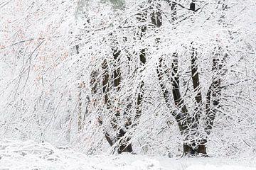 Een winters tafereel. Dwingelderveld, Drenthe. van Ton Drijfhamer