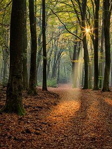 Spectacle de lumière dans la forêt sur Costas Ganasos