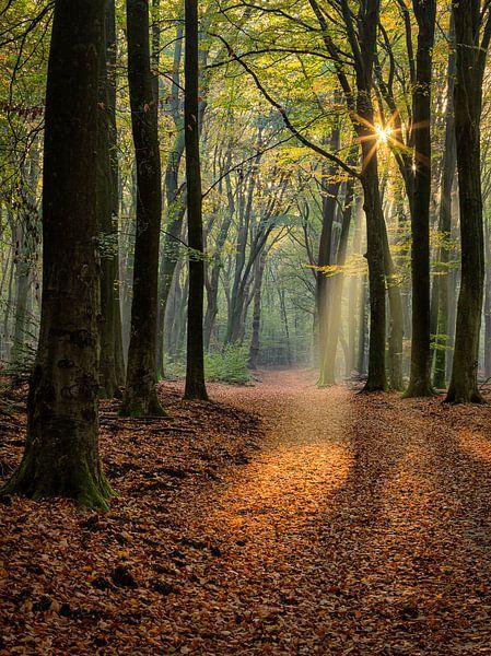 Lichtshow im Wald von Costas Ganasos