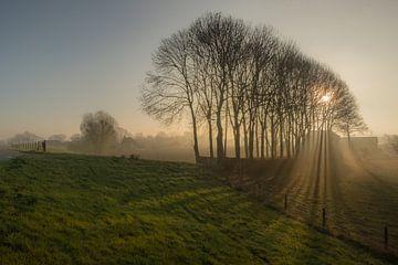 Zonneharpen von Moetwil en van Dijk - Fotografie