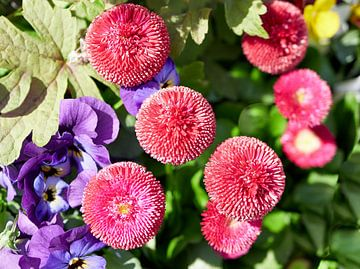 Wunderschön arrangierte Blumen von Christian Mueller