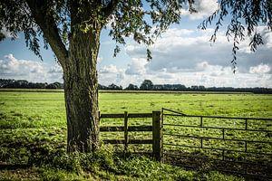 Polderlandschap in de Ablasserwaard van