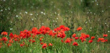 Feld mit Mohnblumen von Ellen Driesse