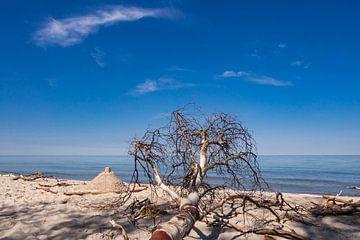 Der Weststrand an der Küste der Ostsee von Rico Ködder