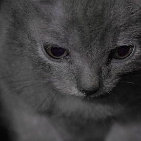Chartreux, ogen. van Berend Doornenbal