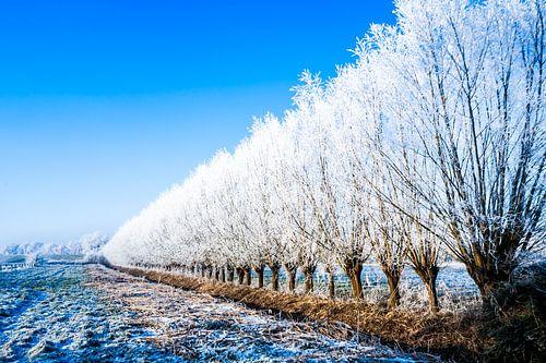 Winter Blauw van