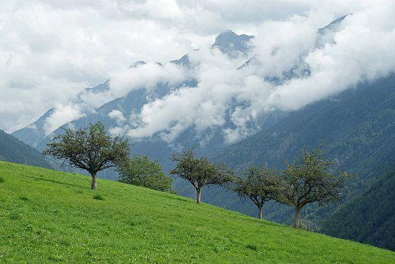 Fruitbomen op helling in Aosta dal met laaghangende bewolking op de achtergrond. van Gert van Santen