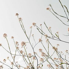 Fleurs séchées naturelles sur fond clair sur Bianca ter Riet