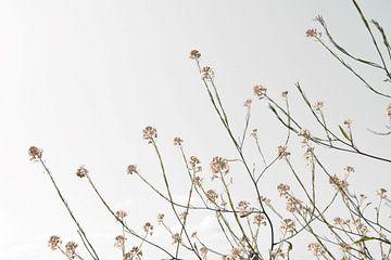 Fleurs séchées naturelles sur fond clair