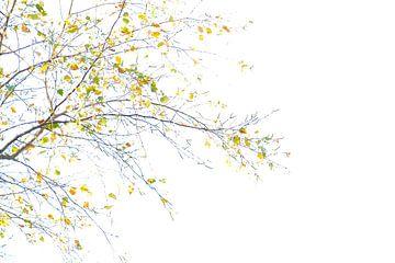 Äste der Bäume von Louis Kreuk