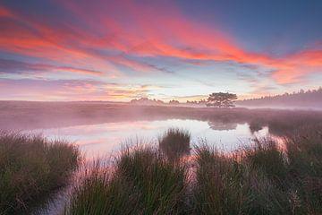 Perfect Morning. van Rob Christiaans