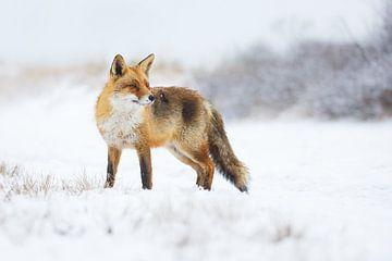 winter sur Pim Leijen
