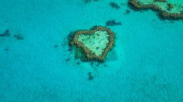 Heart Reef in het Groot Barrièrerif van Martin Wasilewski