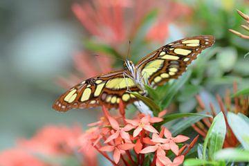 Kleurrijke groen met bruine vlinder van Kim de Been