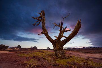 Aekingerzand, Niederlande von Peter Bolman