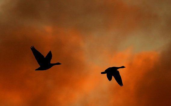 In the sky van Anne Koop