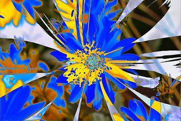 Sonnenhut , Blumen , abstrakt,  (Rudbeckia fulgida)