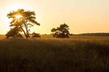 Ein goldener Abend von Danny Slijfer Natuurfotografie