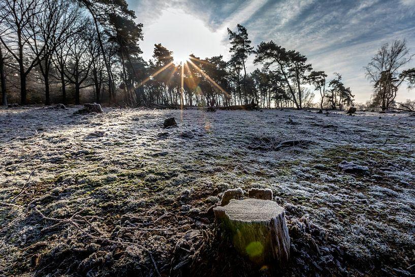 Genieten van een frisse ochtend met een heerlijke zon van Jacques Jullens