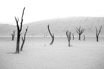 De laatste rustplaats van bomen van