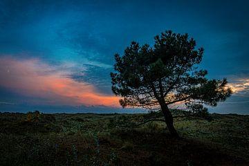Spar am Abend auf Vlieland von Vlielandplaatjes