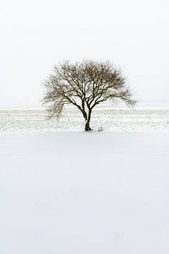 Winterse boom van Mark Bolijn