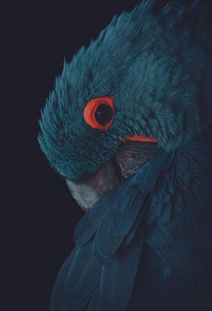 Blauwe ara met vintage kleurstelling van Hendrik Jonkman