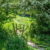 Verborgen wandelpaadje in Zuid-Limburg van John Kreukniet thumbnail