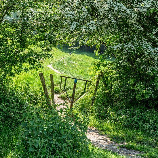 Verborgen wandelpaadje in Zuid-Limburg
