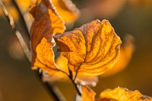Herfst Blad van Carla Eekels