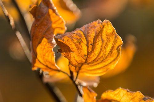 Herfst Blad von Carla Eekels