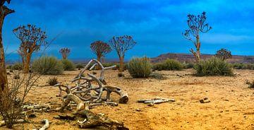 Panorama met kokerbomen in de Kalahari woestijn, Namibië van Rietje Bulthuis