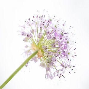 Flower bright van