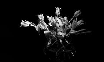Tulpen in zwartwit von Janny Kanters
