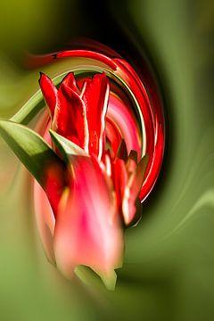 Tulpe von Karl-Heinz Lüpke